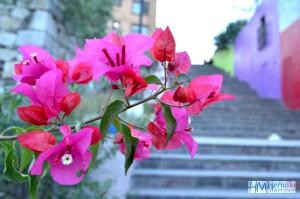 Una bella Flor